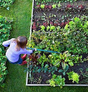 organic-gardening.jpg